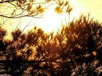 кафяви дървета под бяло небе през деня