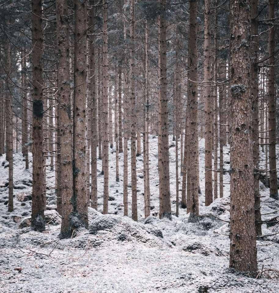 кафяви дървета върху бяла снежна покривка през деня - Шведска мразовита гора. Борос, Борос, Сверидж (17×18)