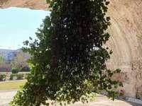 Дива смокиня напротив Бая Наполи
