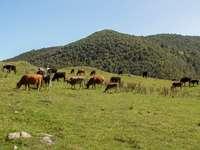 hnědá a bílá kráva na zelené louky během dne