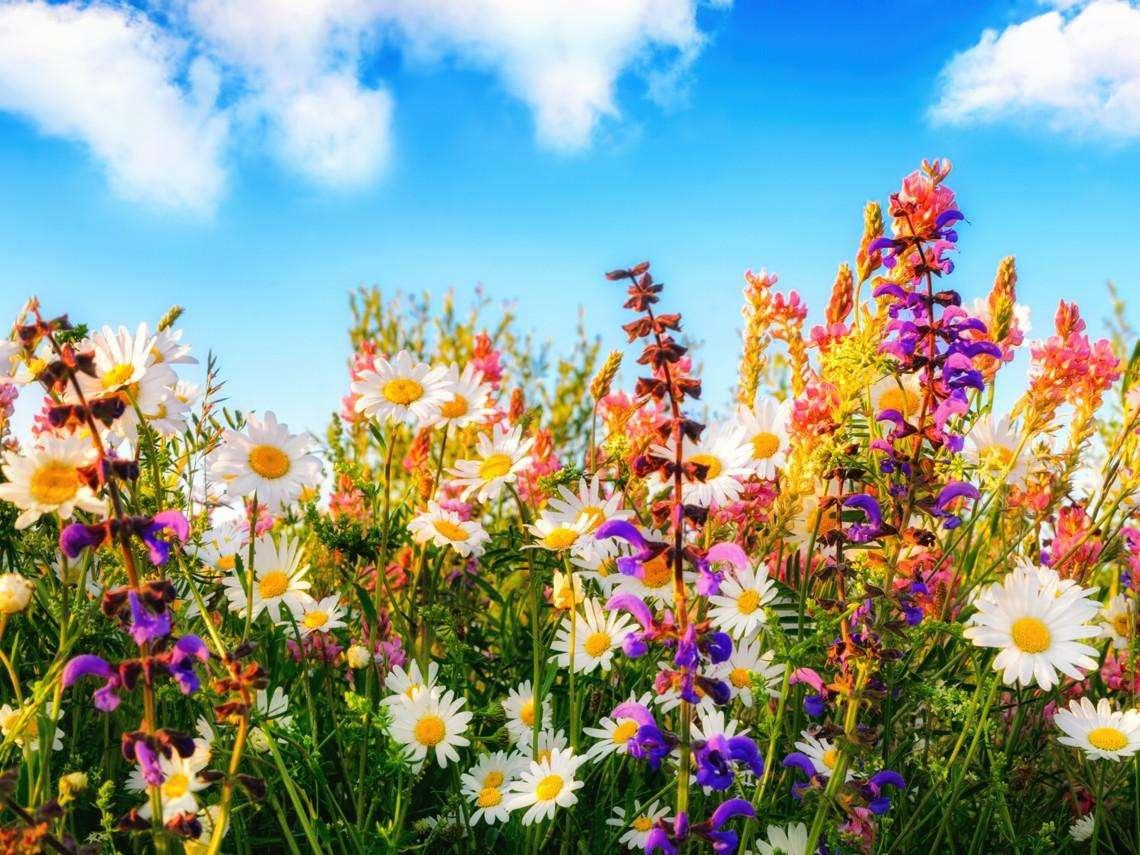 Prado de flores - Flores silvestres de muitas cores (20×15)