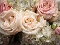 roses roses et blanches en fleurs