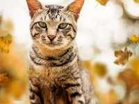 kitten...