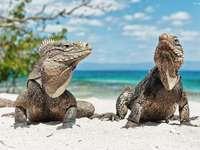 Reptile puternice - Dragoni