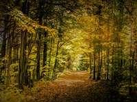 hnědá cesta mezi zelenými stromy během dne