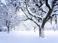 árvore sem folhas em solo coberto de neve