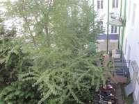 зелена преддворка
