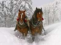 cavalos em um passeio de trenó