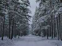 árvores cobertas de neve durante o dia