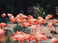 стадо фламинго на вода