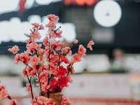 κόκκινα και άσπρα λουλούδια σε καφέ ξύλινη κατσαρόλα