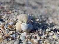 conchas brancas e cinza na areia cinza durante o dia