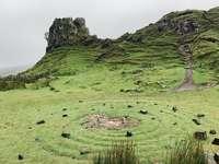 zielone pole trawy na górze