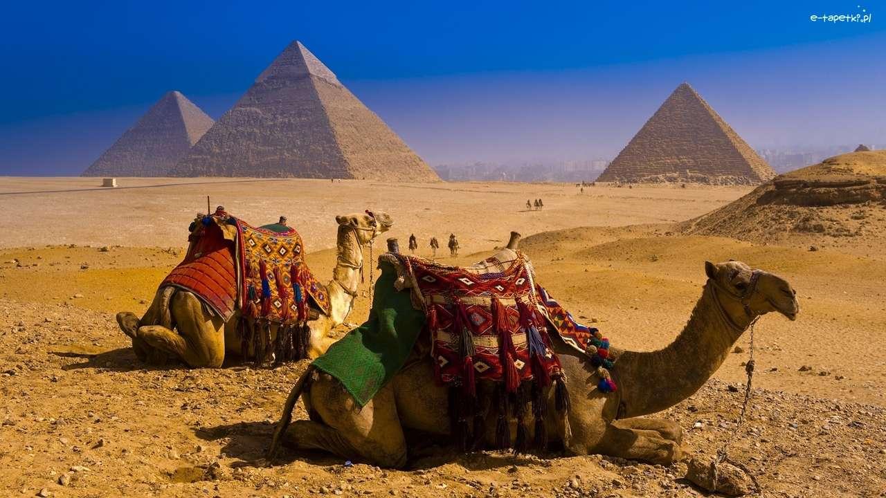 pyramidy, velbloudi v Egyptě - m (14×8)