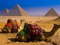 pirâmides, camelos no Egito