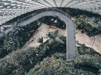vista aérea de árvores e plantas verdes