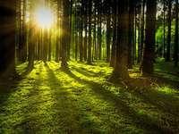 Nachtwald heheh