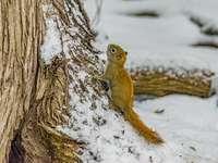 bruine eekhoorn op bruine boomtak overdag