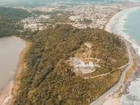 vista aérea de árboles verdes y edificios blancos