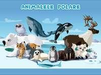 Animalele polare