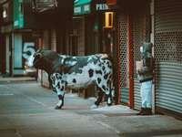 donna in costume da mucca bianca e nera che cammina sulla strada