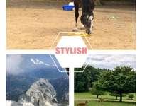 Un caballo y un ciervo y una montaña