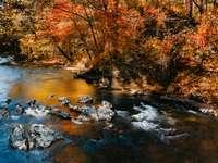 hnědé stromy u řeky během dne