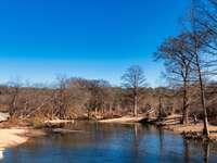 bruine bomen naast de rivier onder de blauwe hemel overdag