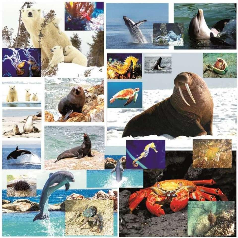 Animale marine - Animale marine mari si mici sa le joace doar cei mici (7×7)