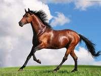 Calul nostru