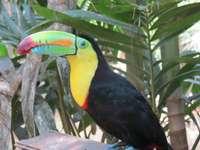 barevný tukan