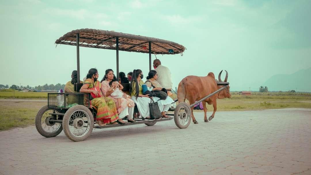 pessoas andando na carruagem com vaca marrom ao lado - pessoas andando na carruagem com vaca marrom ao lado durante o dia. . Coimbatore, Índia (12×7)