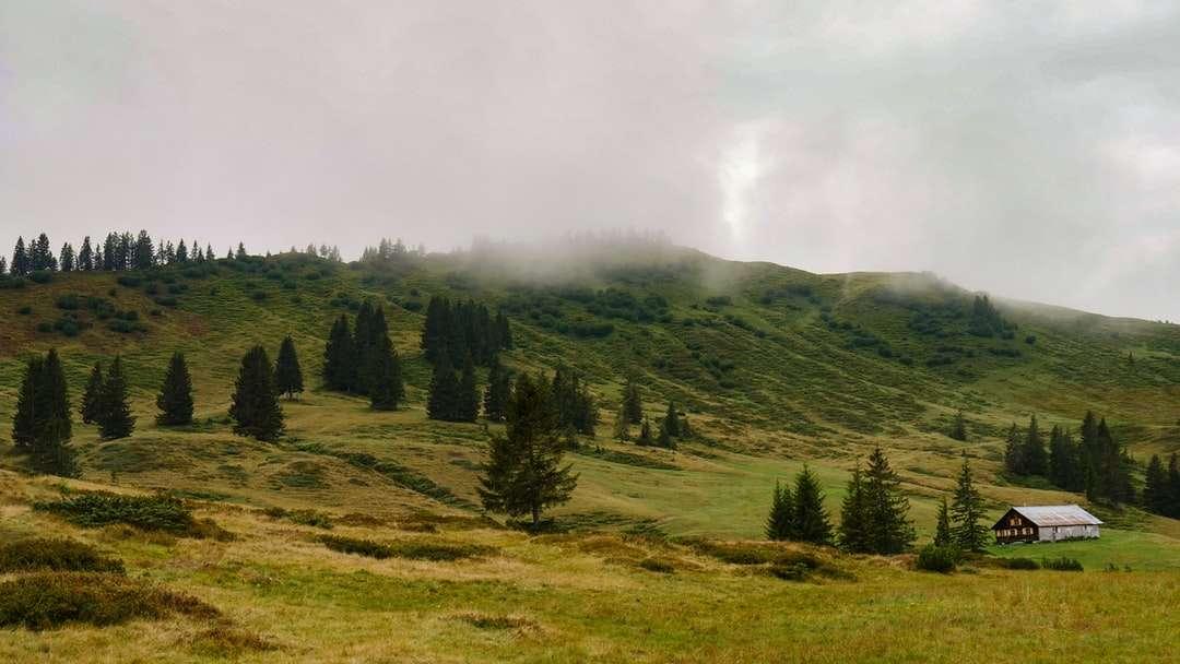 gröna träd på grönt gräsfält under vita moln - Sikt på ett berg i Tyskland (7×4)