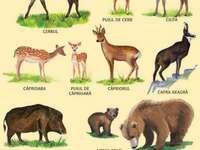 Animalele sălbatice