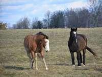 bruin en wit paard op groen grasveld overdag