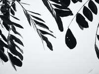 ilustracja czarno-białych liści