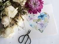 fleurs violettes et blanches sur papier blanc