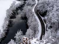 zasněžené stromy a silnici
