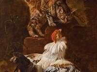 Ένας αγώνας μεταξύ ενός κόκορα και μιας γάτας