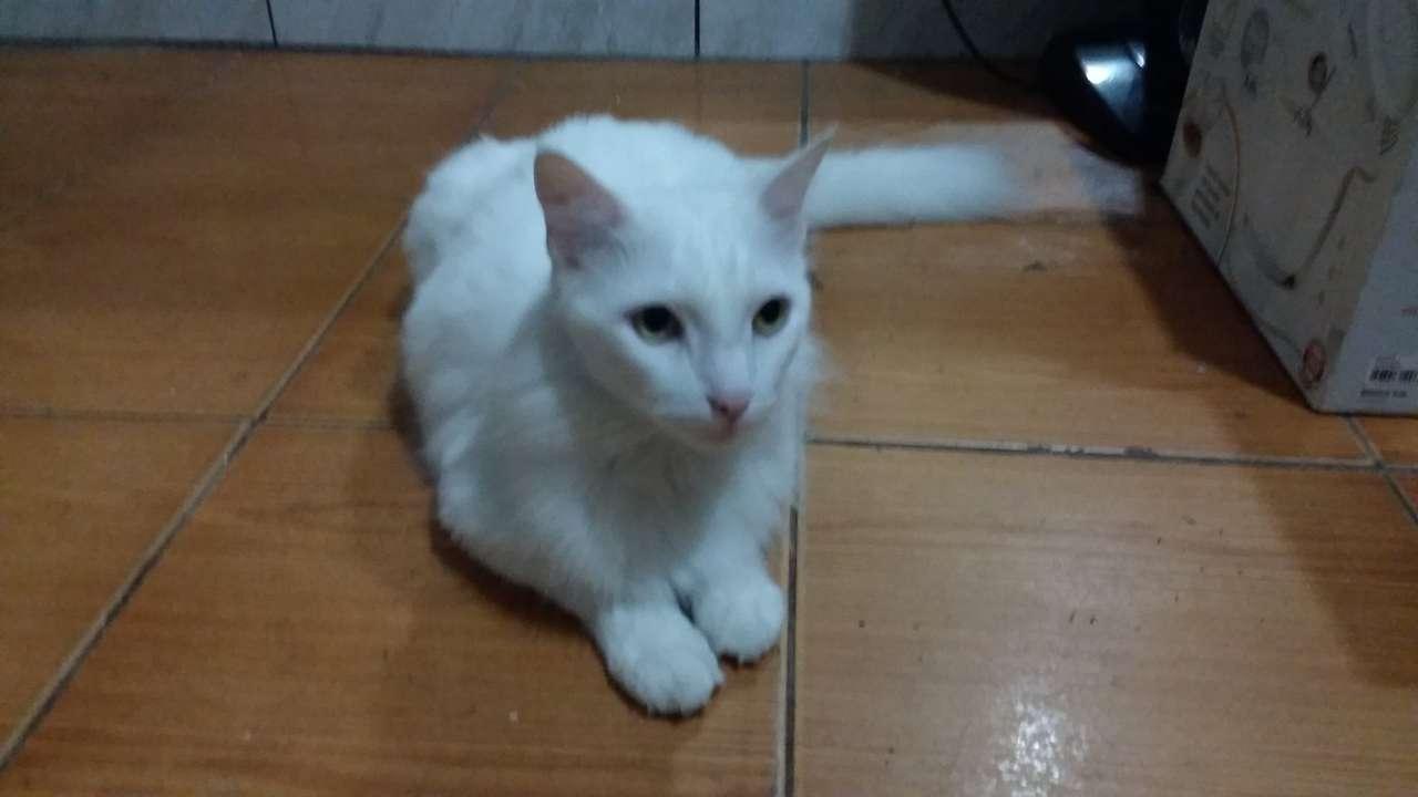 Η όμορφη μου γάτα - αυτή είναι η πολύ χαλασμένη γάτα Felix (12×7)