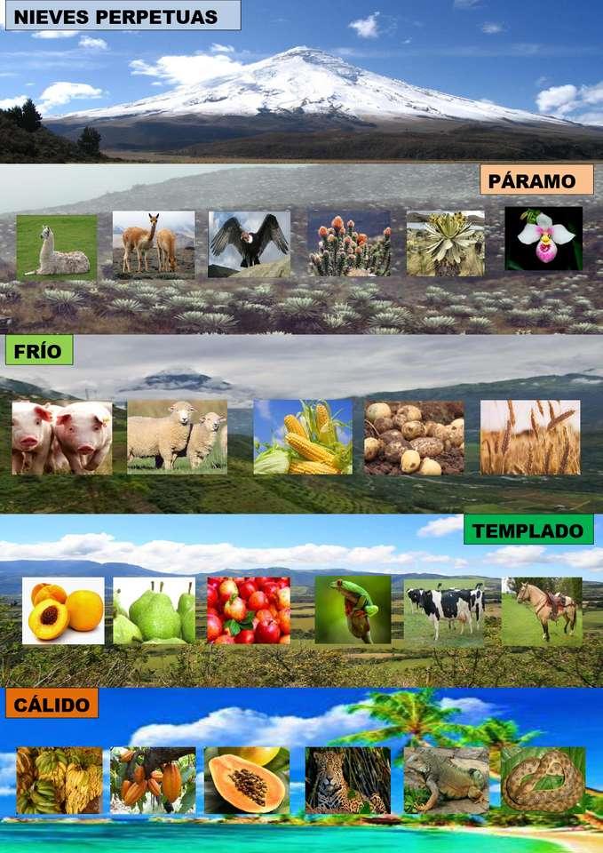 Pisos climáticos - Equador tem 5 pisos climáticos (4×6)