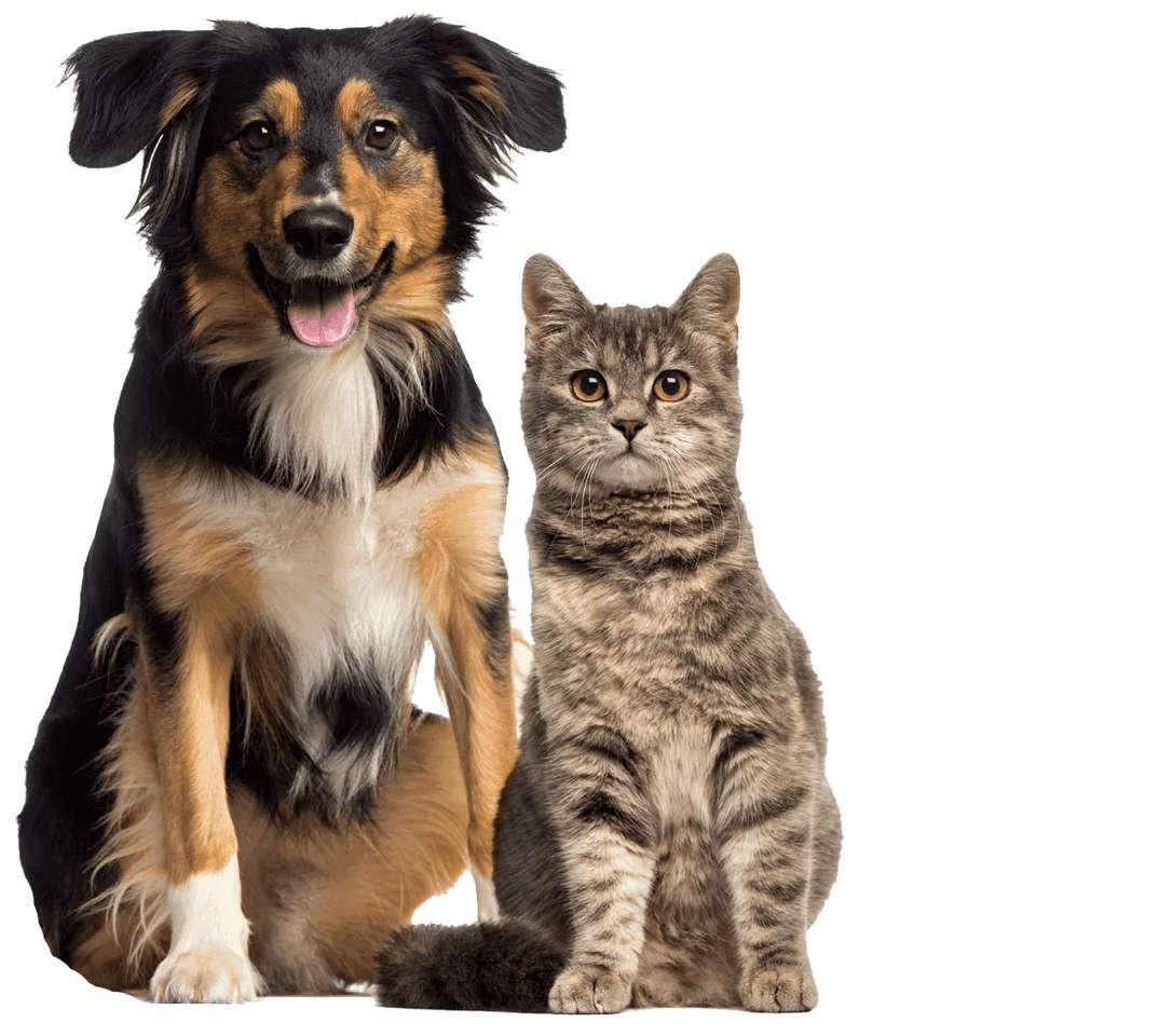 Σκύλοι και γάτες παζλ - Επιτραπέζιο παιχνίδι με σκύλους και γάτες (3×3)