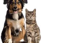 Σκύλοι και γάτες παζλ