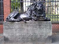 Το άγρυπνο λιοντάρι