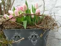 tulipes dans un seau
