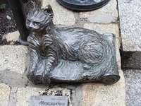 Cats from Kocich Góry