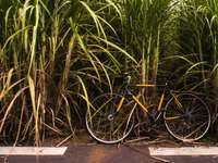 black bicycle parked beside green plant