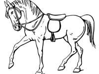 Kůň123