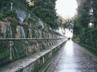 grå betongbro mellan gröna träd under dagtid
