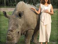 Sudan (noshörning)